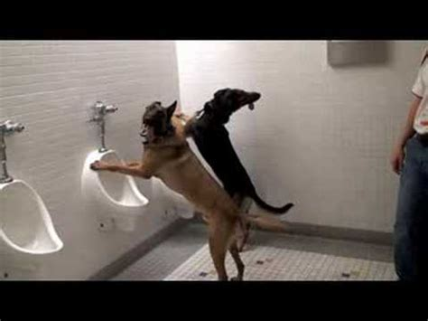 house breaking your dog dog sitting on the toilet funnycat tv