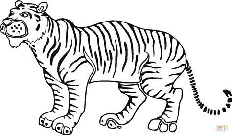 indian tiger coloring page disegno di una bella tigre da colorare disegni da