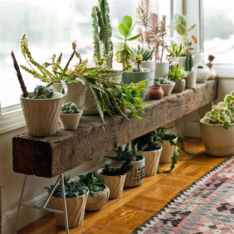 plant bench indoor stylish indoor plant stands sunset