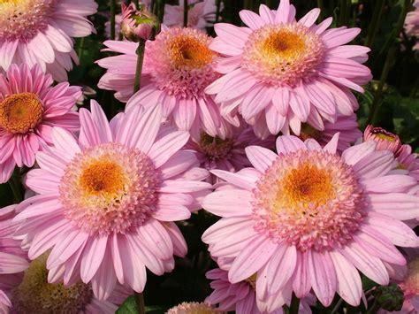 piante ricanti da vaso ricanti con fiori piante ricanti ricanti ricanti