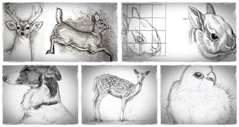 How To Sketch Animals   ?Drawing Animals In Pencil? Helps