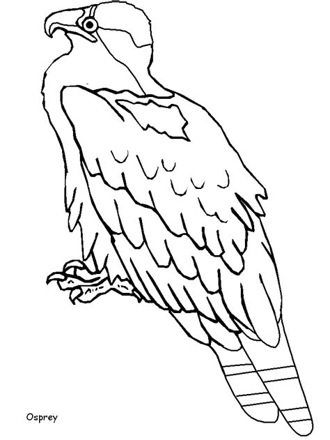 tody bird coloring page larry bird free coloring pages