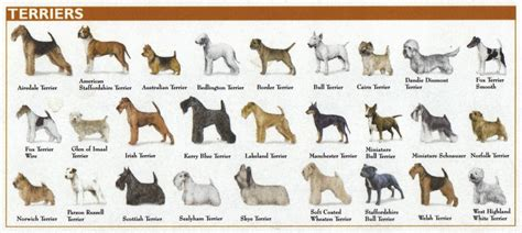 types of dogs chart breeds pictures chart breeds picture