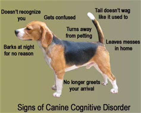 cognitive dysfunction in dogs deer park animal hospital pet care information