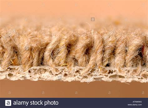 Karpet It Up carpet up side profile stock photo royalty free
