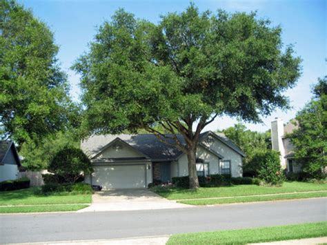 home insurance trees close to house insurance trees near house 28 images insurance claims home improvements tornado