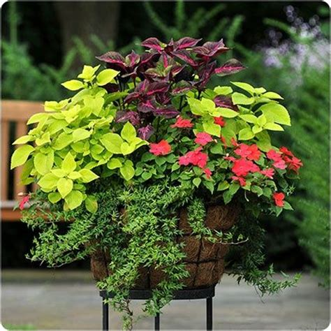 container gardening minnesota 17 best images about container gardens and window boxes on