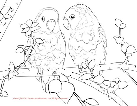 coloring pictures of lovebirds lovebird