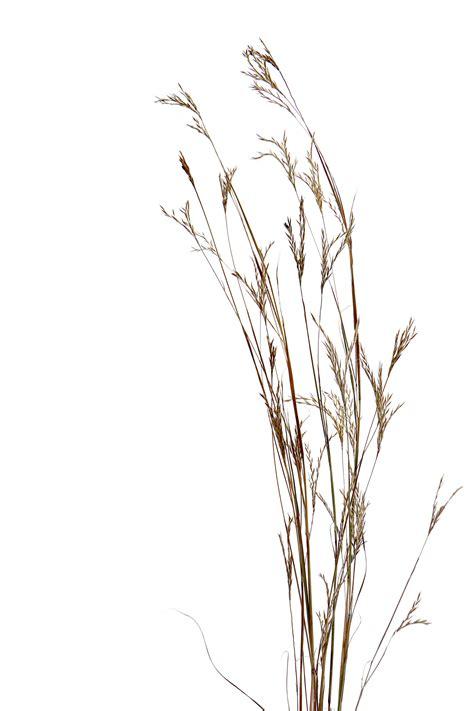 grass tattoo big blue stem prairie grass jo hoffman still on