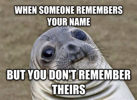 Awkward Seal Meme - 12 best awkward moment seal memes dose of funny