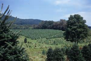 file southern virginia christmas tree farm jpg wikimedia
