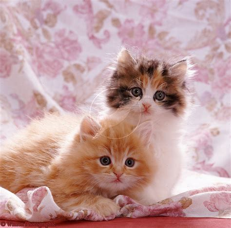Cutest Cats Pet Pet Pet Product 7 by Of Dogs Pets Cats And Kittens Pictures Wallpapers