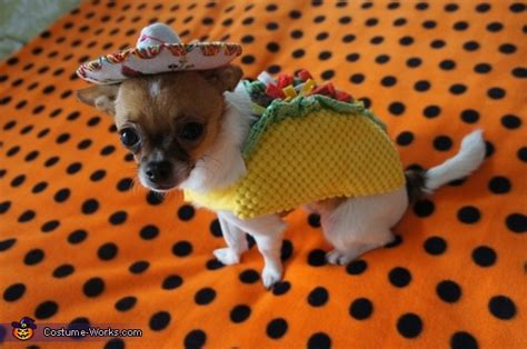 taco puppy taco rodeo cat costume photo 3 9