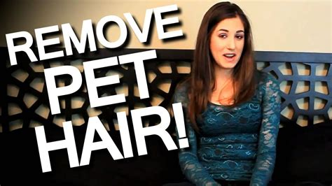 how to clean dog hair off couch how to remove pet hair off furniture clothing and linens