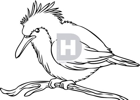 how to your to be a bird how to draw a kingfisher bird step by step drawing guide by darkonator drawinghub