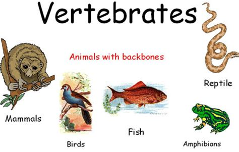 notes  classification  vertebrates grade  science classification  living