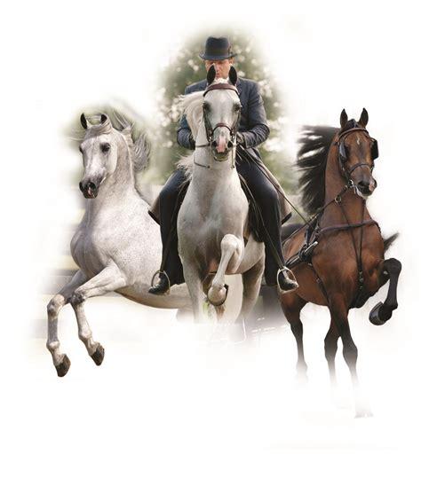 stud fees stallions