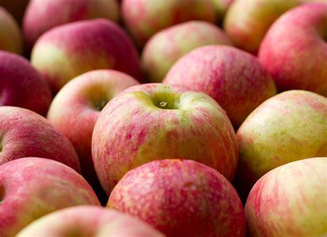 fruit zone fresh from zone 7 tree fruit
