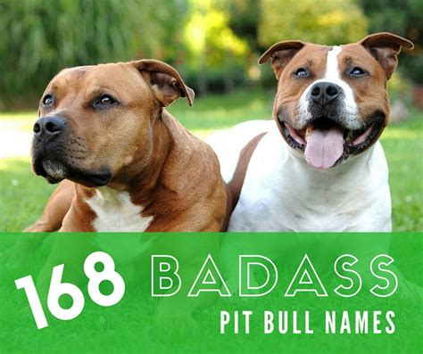 badass names badass pit bull names for males and females pethelpful