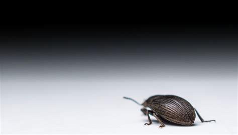 ohio bed bug infestation  making national news
