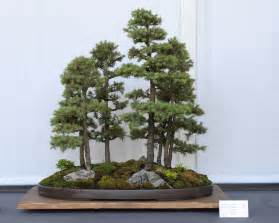 bonsai tree planters submited images bonsai planter buy bonsai planter planter box