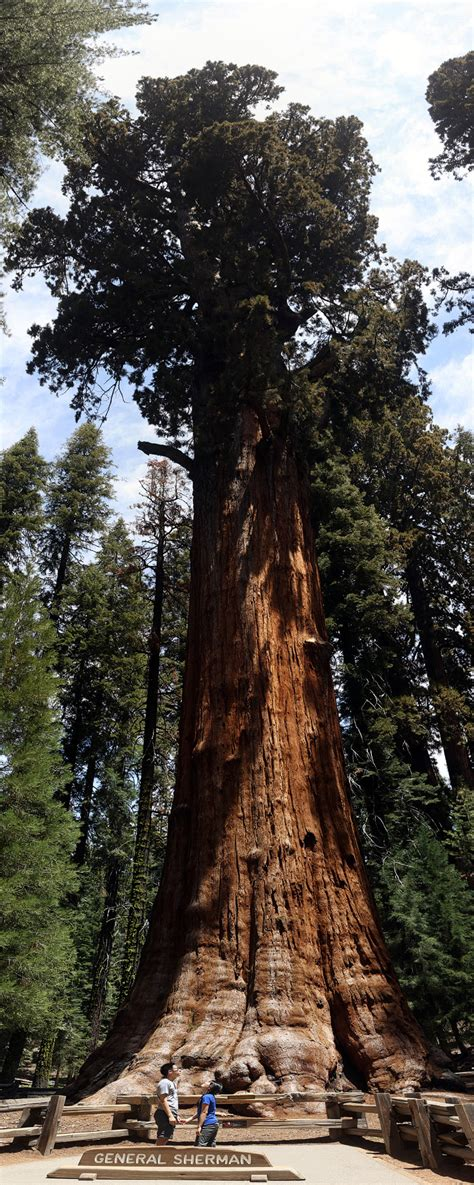 general sherman tree sequoia national park in california 15 amazing things to do in sequoia national park kings