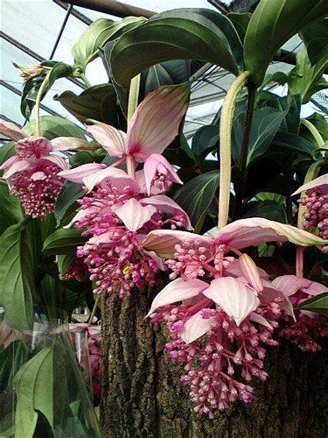 exotic house plants best 25 exotic plants ideas on pinterest exotic flowers amazing flowers and