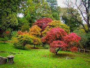 Patio Japanese Maple Image Gallery Ornamental Trees