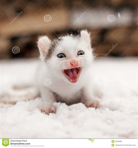 funny small small funny kitten on snow royalty free stock photo