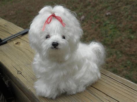 grown teddy teddy dogs grown breeds picture