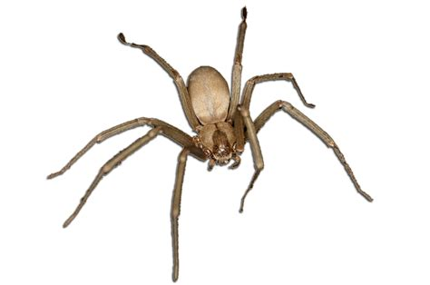 Barns Garages by Pest Control Spiders Titanium Laboratories Inc