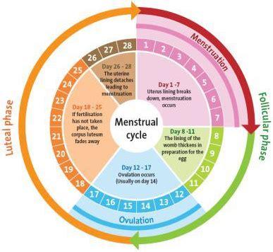 menghitung  subur  cepat hamil berbagi