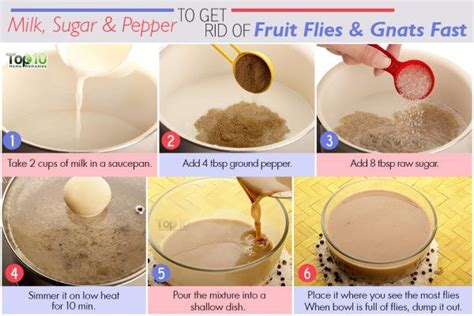 Home Remedies For Fruit Flies by How To Get Rid Of Fruit Flies And Gnats Fast Top 10 Home