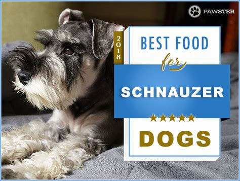best food for miniature schnauzer puppy top 6 recommended best foods for a schnauzer