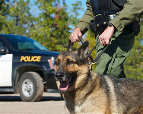 cop dogs arrested for barking at cop 4umf current events current news news