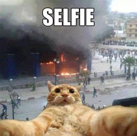 dog selfies cat selfies  animal selfies