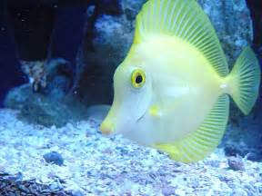 Top 50 Beautiful Fish Photos Images And HD Wallpapers