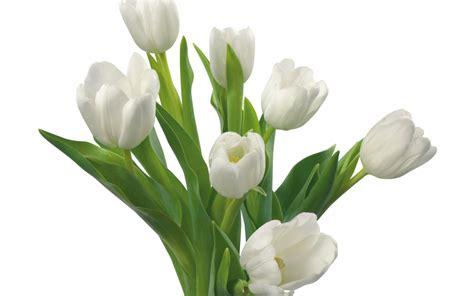 imagenes flores boda flores m 225 s usadas en las bodas