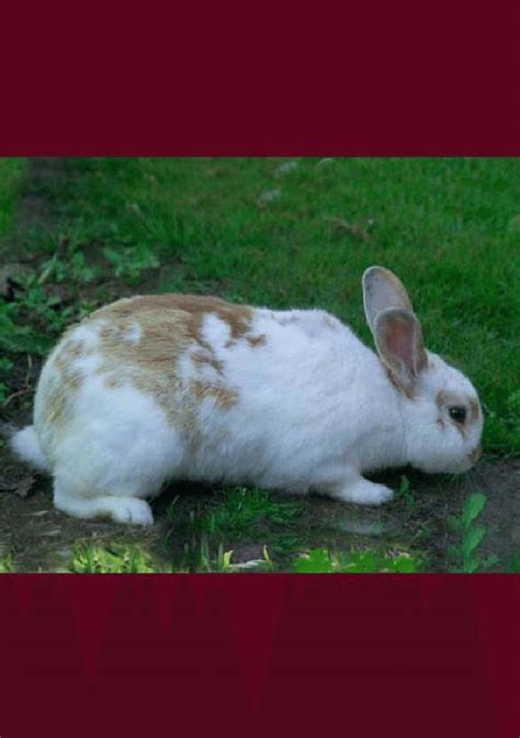 backyard rabbit farming backyard rabbit farming pdf download available