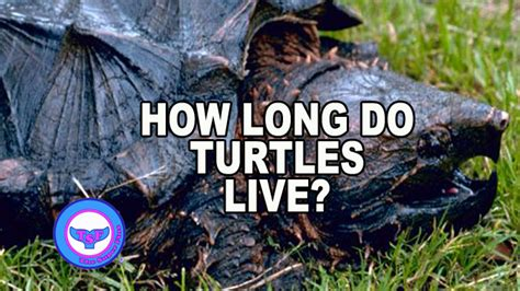 how many years does a live how do turtles live the fins