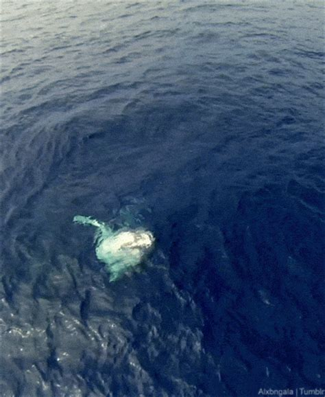 wale gif whale gif on tumblr