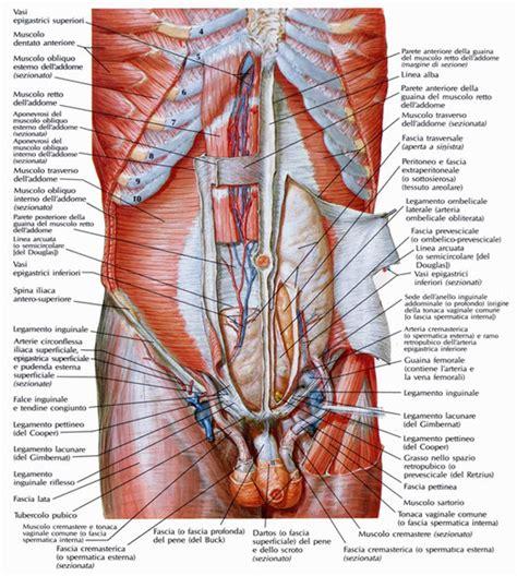lacuna dei vasi pillole di anatomia pilates liberequilibrio