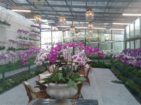 Orchid Room by The Orchid Room Picture Of The Majestic Hotel Kuala