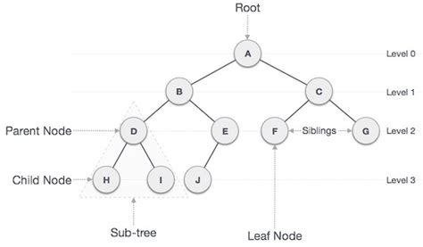 tutorialspoint linked list in c tree php 7 data structures and algorithms book