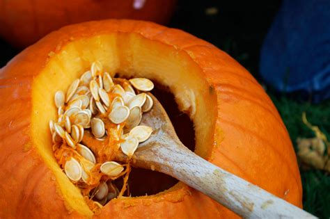 when to plant pumpkin seeds for how to harvest and store pumpkin seeds