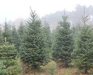 page s christmas tree farm syracuse ny you cut pre cut