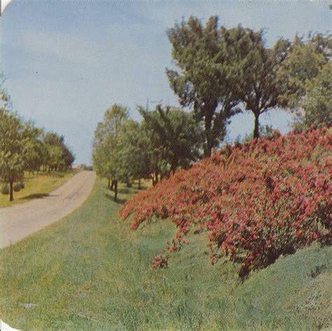 Garden Of Jackson Missouri Roses Garden Mottos And Postcards On