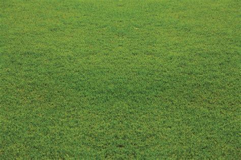 Santa Grass by Santa Bluegrass Blend Nullabour Strathayr