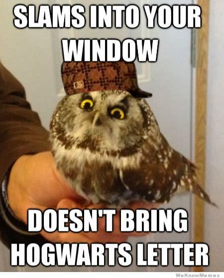 Funny Owl Memes - 16 funny owl memes for fum and interesting articles feafum