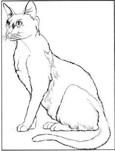 manx cat coloring page abyssinian cat breeds coloring manx cat and all